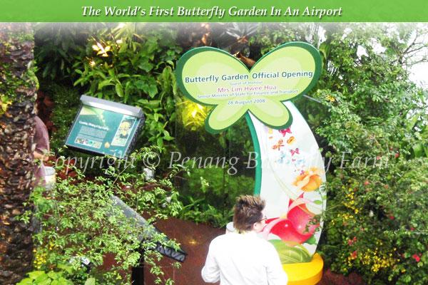 butterfly garden opens at